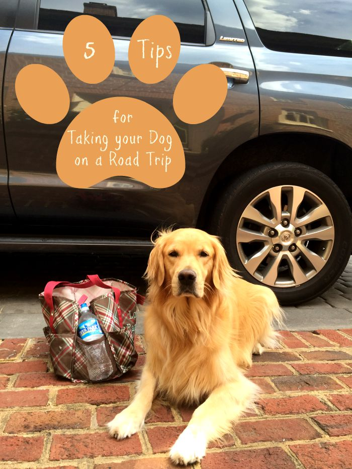 Packing Tips For Traveling With Your Dog are a must this year! Don't hesitate to take your pets on your next family road trip when you follow our tips!